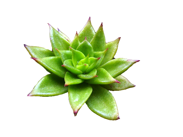 Aesthetic plant png. Image originalgdxx animal jam