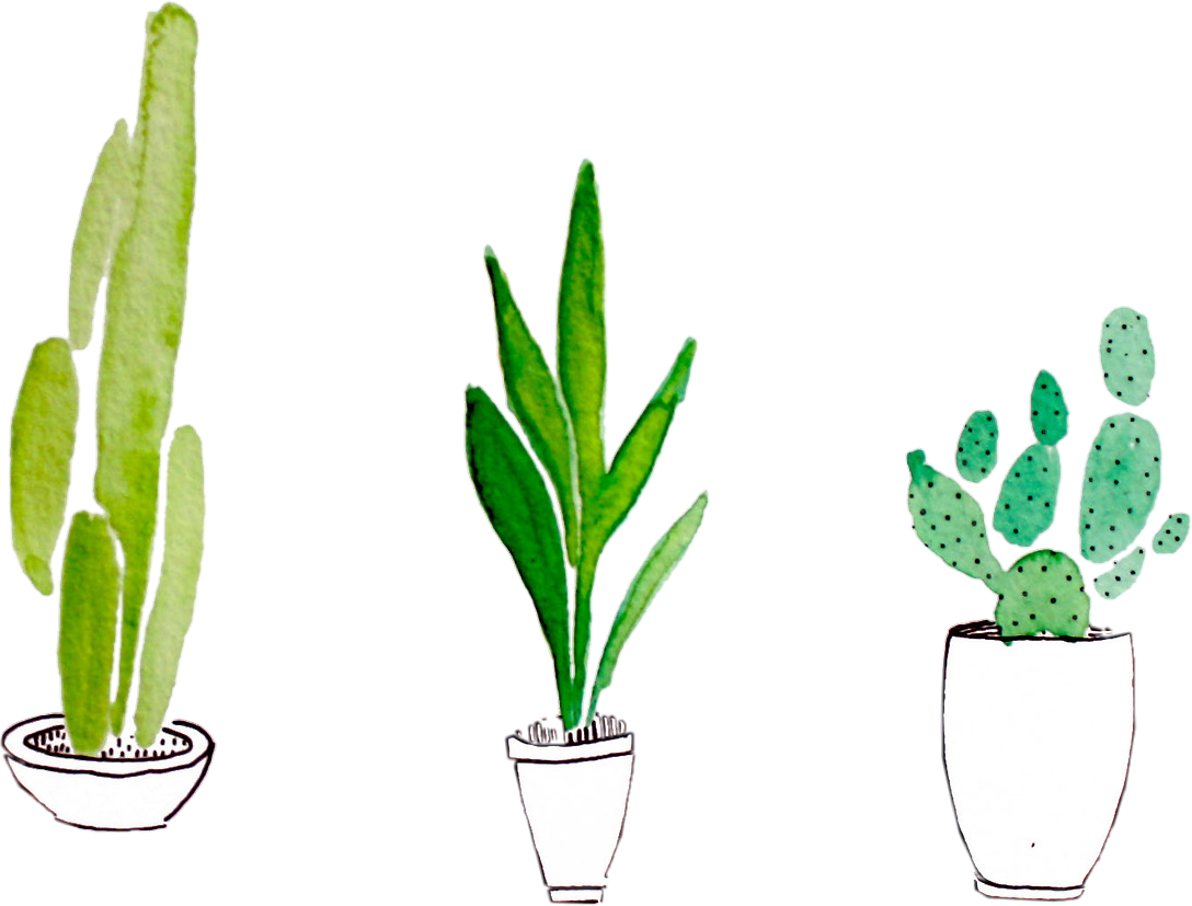 Cactus png tumblr. Sticker plant plants green