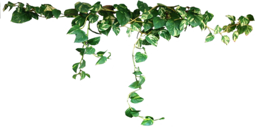 Aesthetic plant png. Plants transparent seapunk aloewave