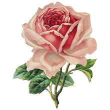 Tumblr roses png. Transparent icons