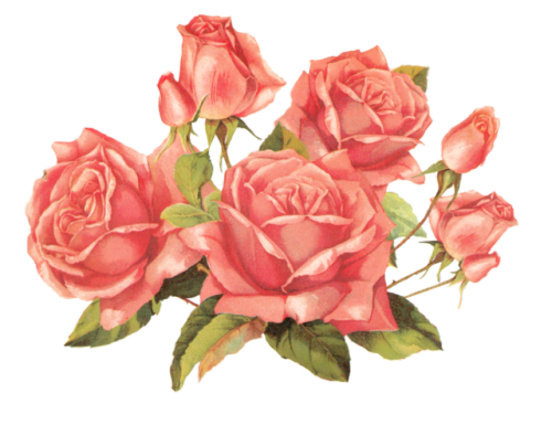 Aesthetic rose png. Transparent roses tumblr for