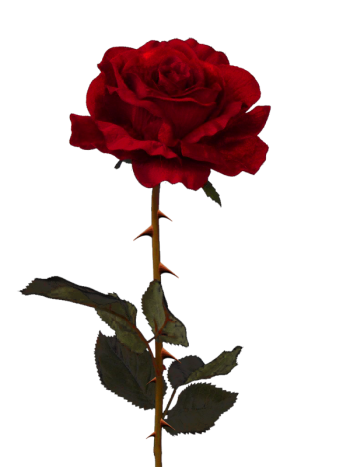 Aesthetic rose png. Tumblr tumblraesthetic aesthetictumblr report