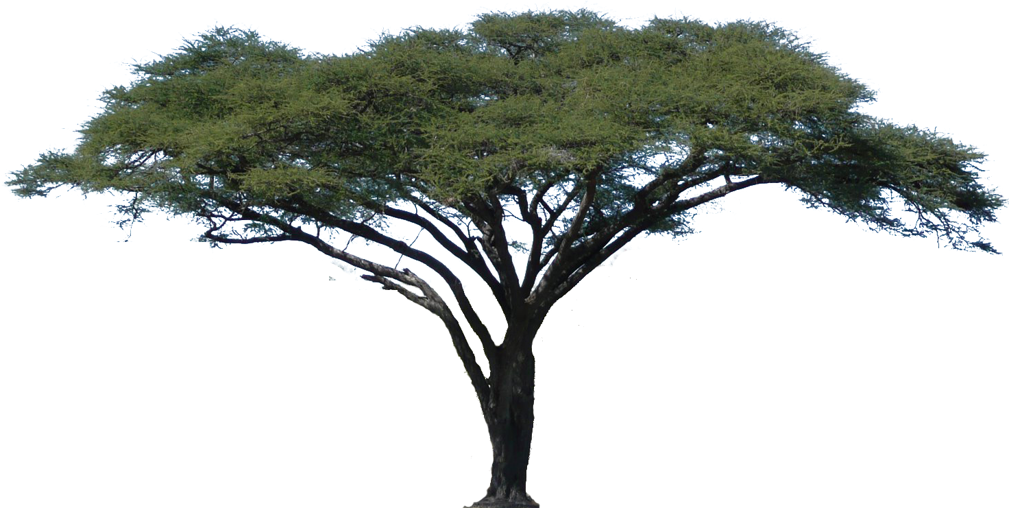 Trees vector png. Acacia tree africa camel