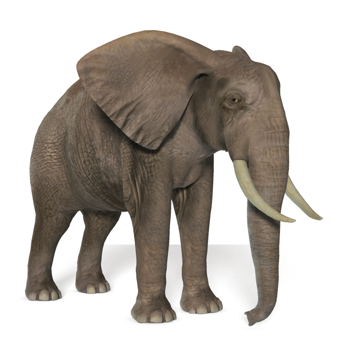 elephant transparent png