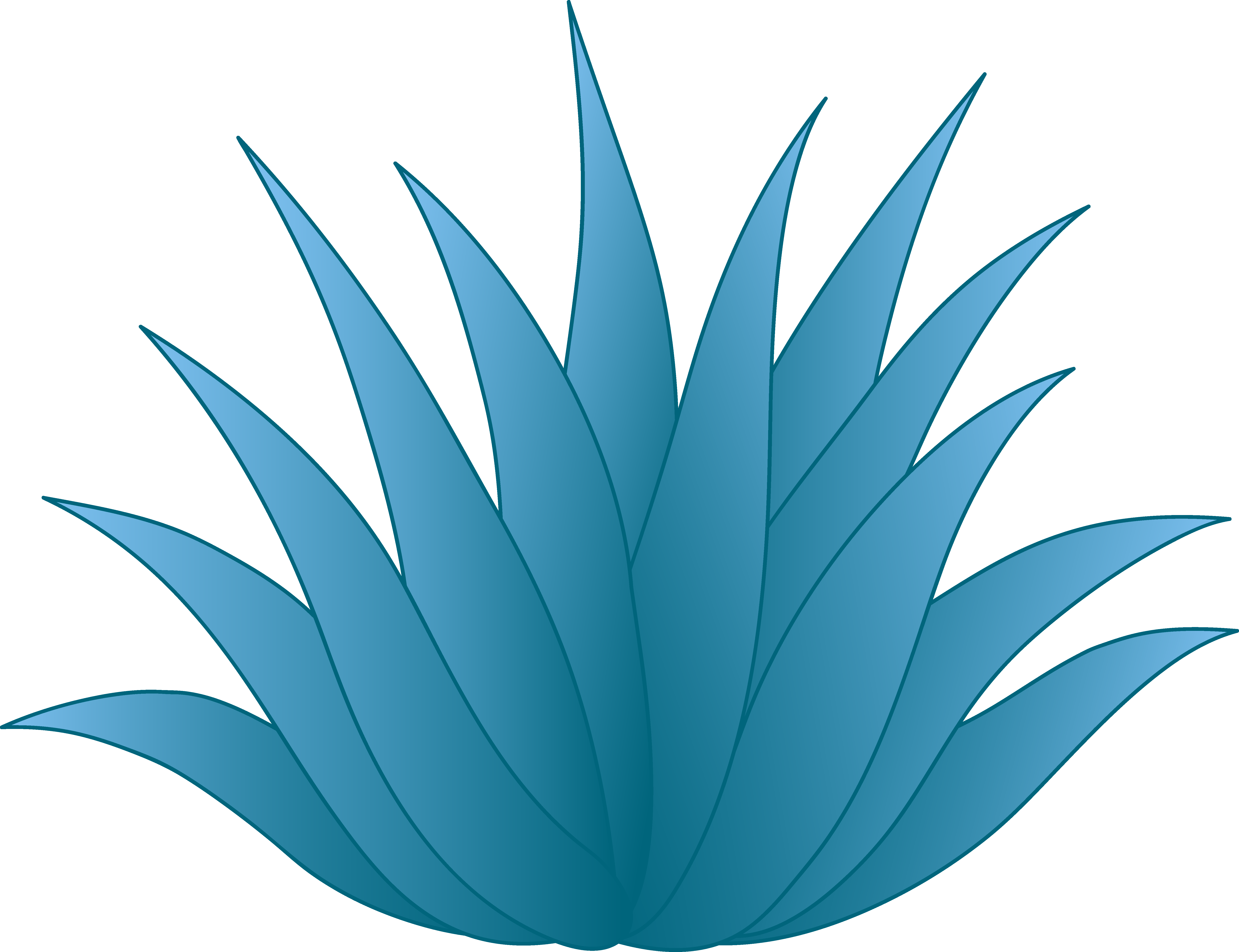 aloe drawing blue agave plant