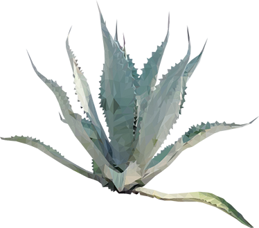 Agave plant png. Sticker tenstickers