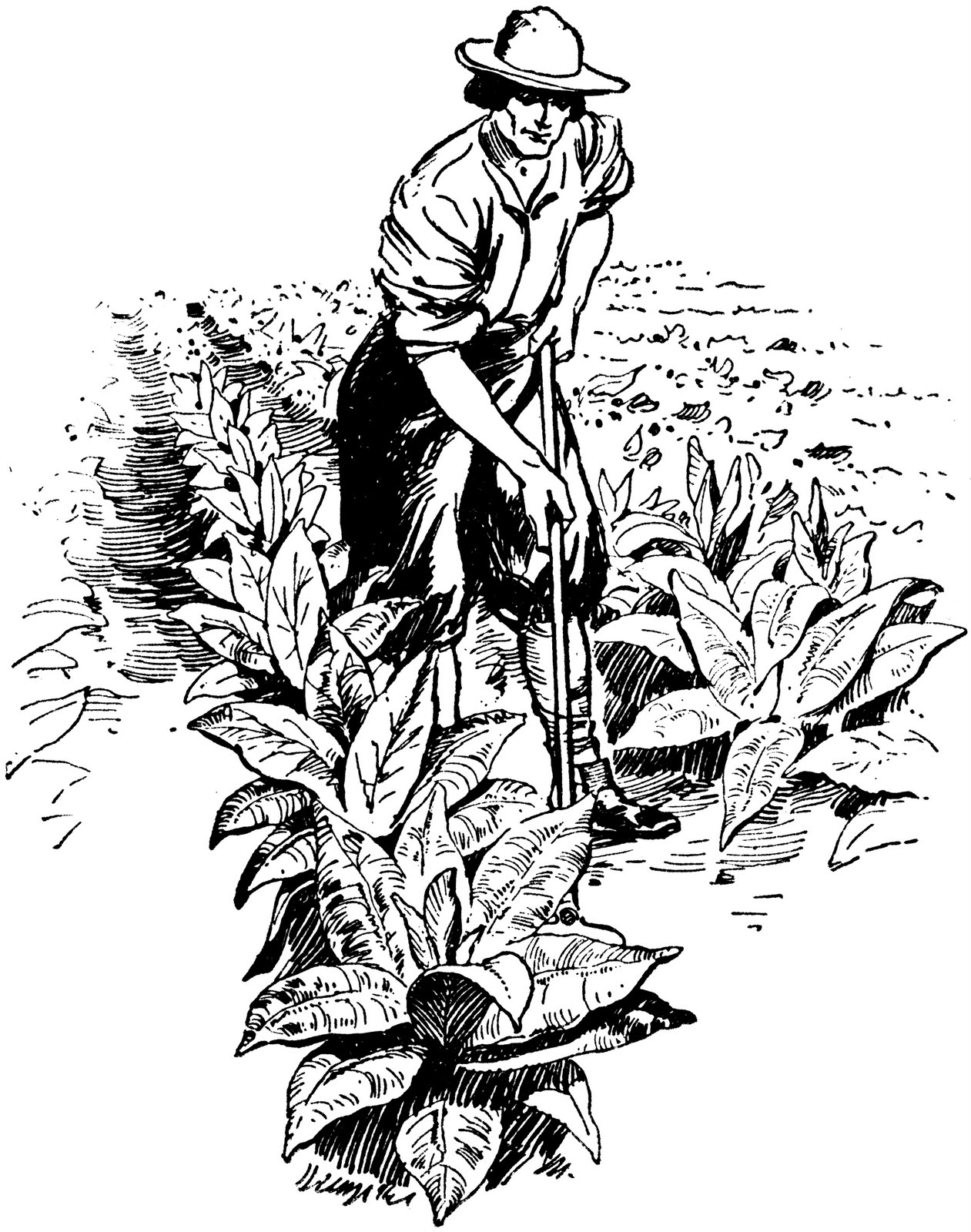 Firecured all things november. Agriculture clipart tobacco crop graphic free library