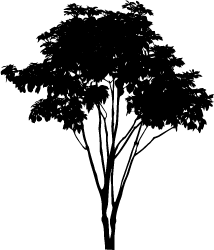 Ai vector tree. Silhouette of