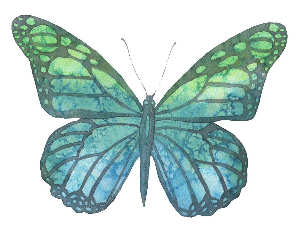 Transparent moth blue green. And hand painted watercolor