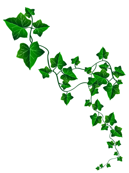 Aka ivy png. Collection of leaves