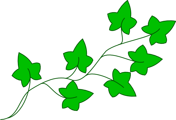 Vine clip art at. Drawing ivy free library