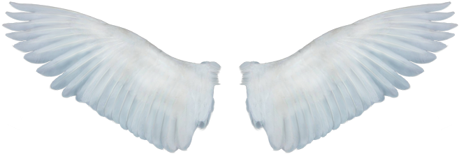 Angels png clipart for photoshop. Download alas de angel