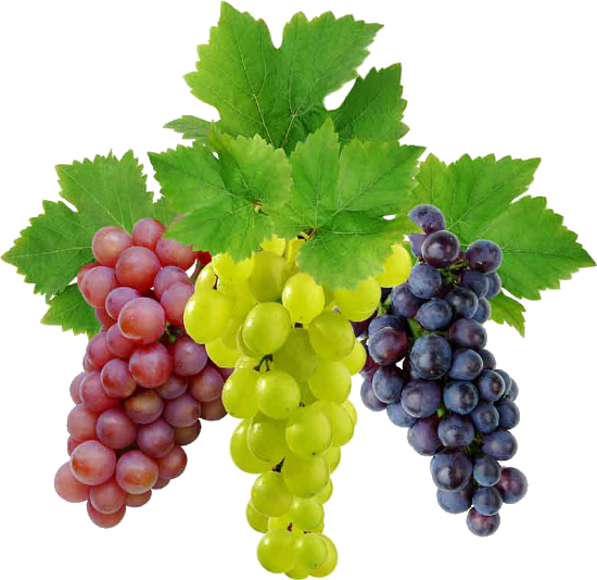 All free download png. Grape image picture