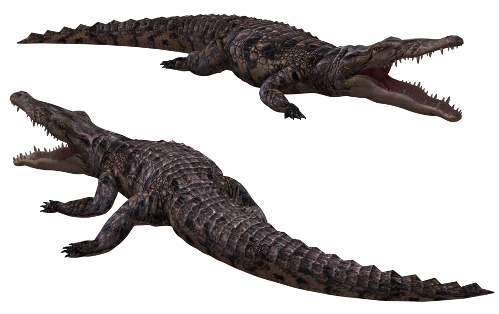 Alligator .png. Crocodile png transparent images