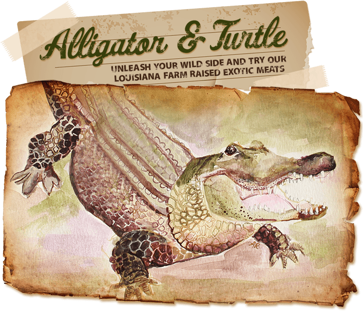 Transparent alligator side view. Buy meat online tail