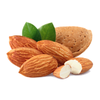 Almond vector badam. Download free png photo
