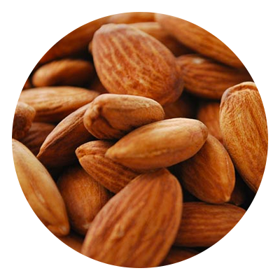 Almond vector castor seed. Sweet oil an essential