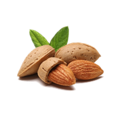Almond vector nut. Millions of png images