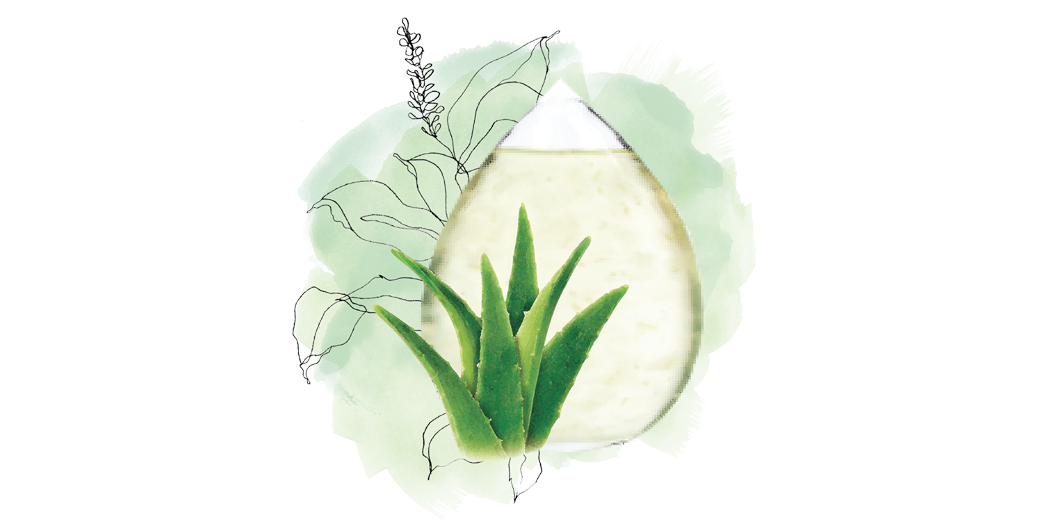 Aloe drawing green plant. Organic vera juice sabai