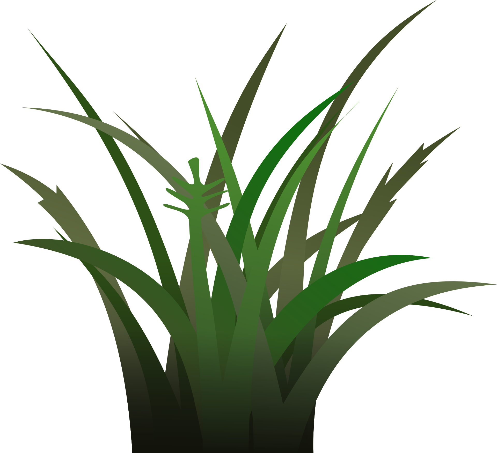 Aloe drawing yucca. Of green grass free