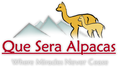 Alpaca clipart mexican. Que sera alpacas is