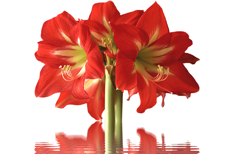 Flower. Types of red