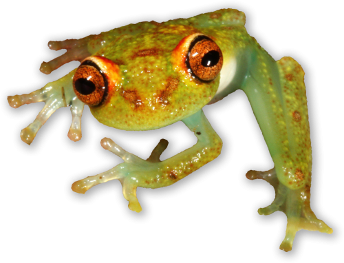 Tropical animals png