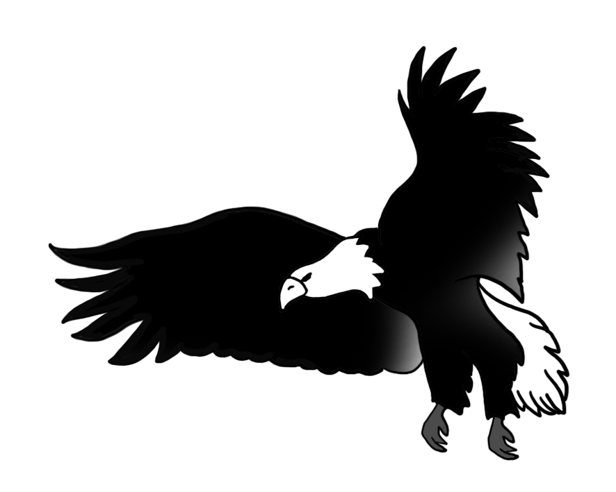 Bald eagle drawings black. Condor drawing transparent library