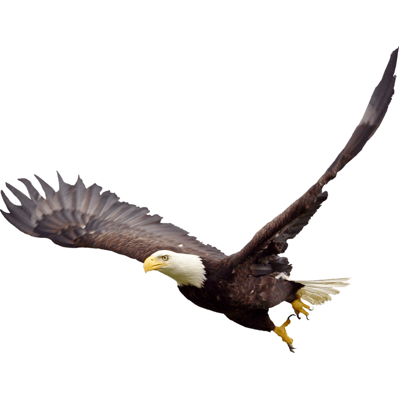 Graphic bedwalls co images. American bald eagle png clip art free download