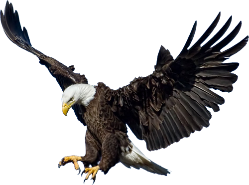 Diving hawk png. Pixels birds of