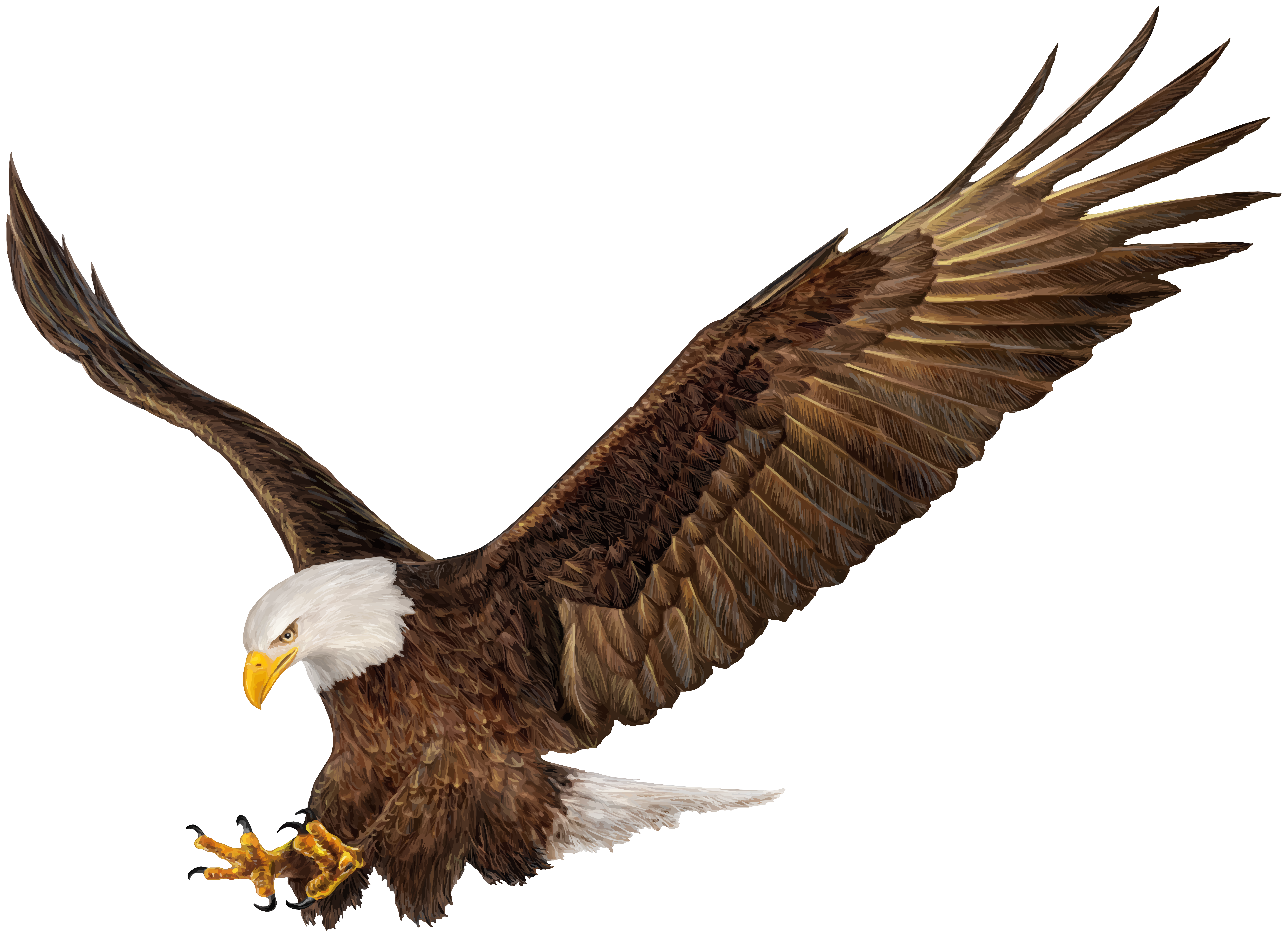 Eagle png. American clip art image