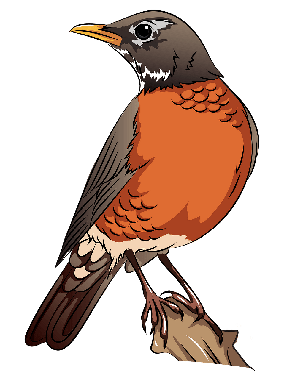 American robin. On the branch clipart