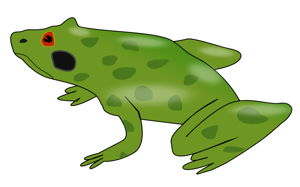 Amphibian drawing bullfrog. American kermit the frog