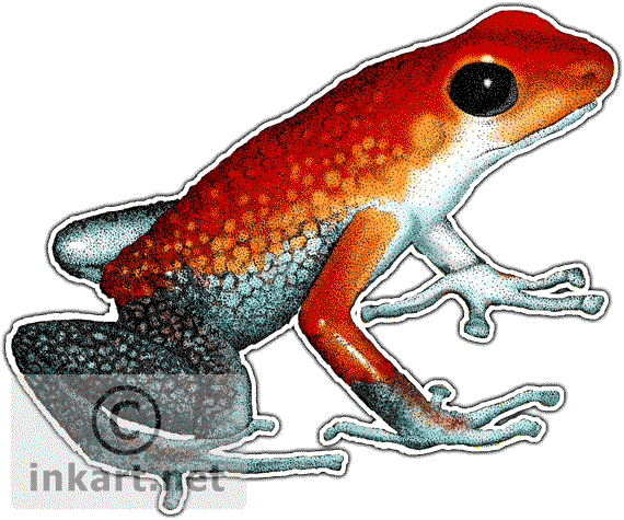 amphibian drawing poison dart frog