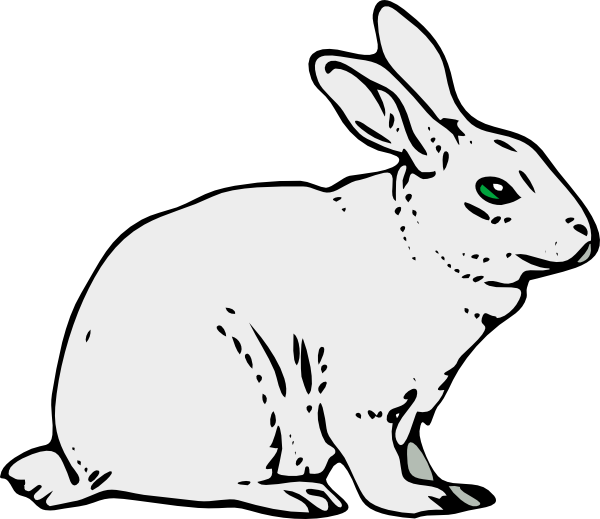 Amphibian drawing rabbit. Rabit at getdrawings com