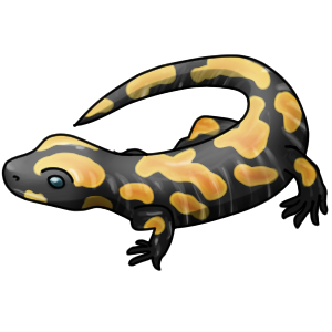 Amphibians drawing tiger salamander. Icon by lithiumjay on