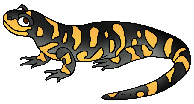Amphibians drawing tiger salamander. Collection of free barred