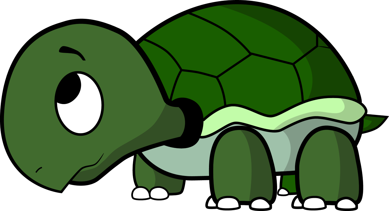 Tortoise vector galapagos. How to draw a