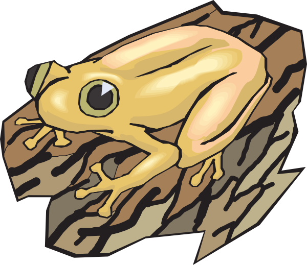 Amphibian drawing wood frog. Yellow on a log