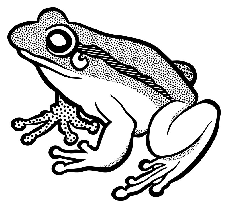 Amphibian drawing wood frog. Clipart lineart medium image