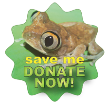 Amphibians drawing art. Save the frogs contest