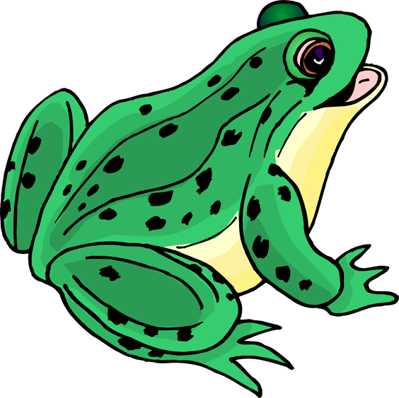 Amphibians drawing bullfrog. Collection of free amphibiums