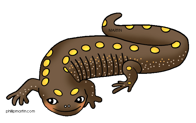 Newt drawing clipart. At getdrawings com free