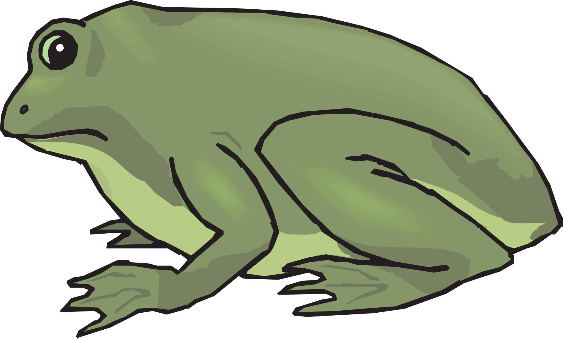 Amphibians drawing rainforest frog. Tropical green free image
