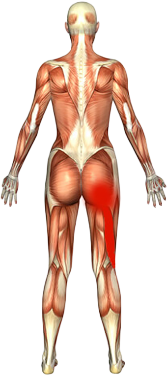 Anatomical muscle stretching png. Sciatica exercises my back