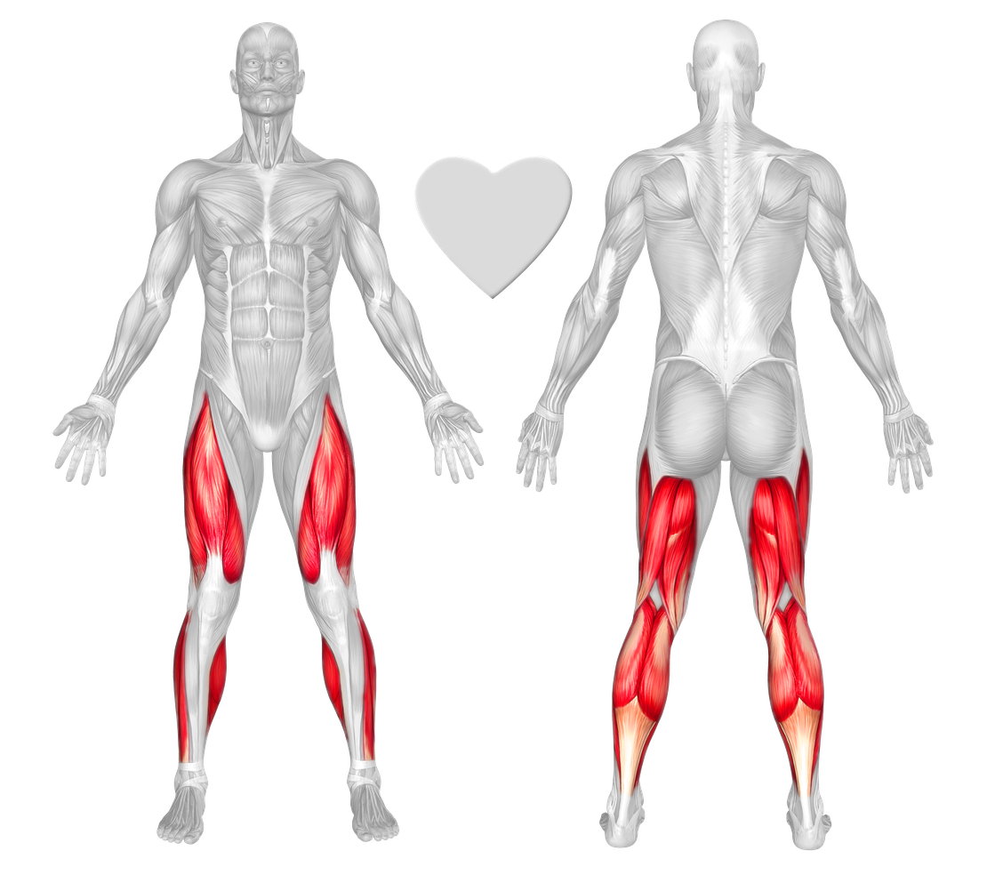 Anatomical muscle stretching png. Legs exercises workouts freetrainers