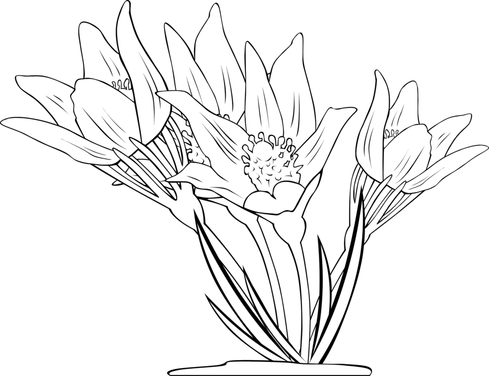 Bouquet vector anemone. Coloring book flowering plant