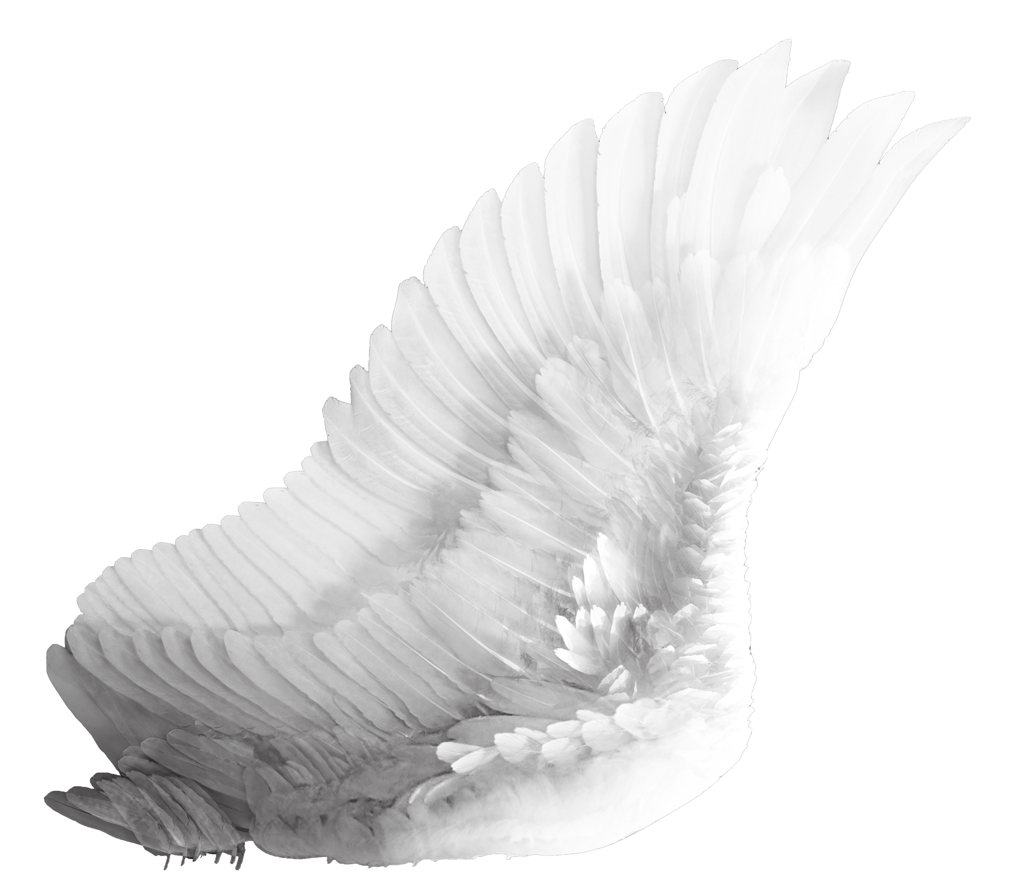 Angel feather png. Wings white image purepng