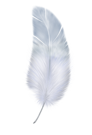 Feather png.