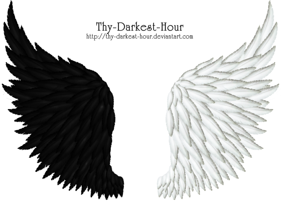 Black feather wing png. Images of angel and